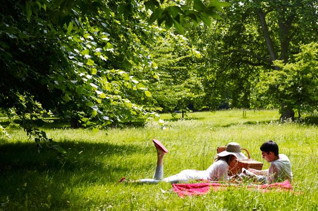 7-picnic